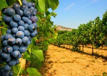 Connaitre le Vin